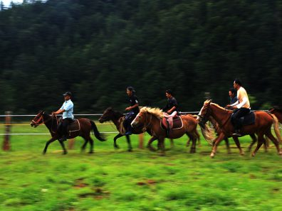 canter in arena